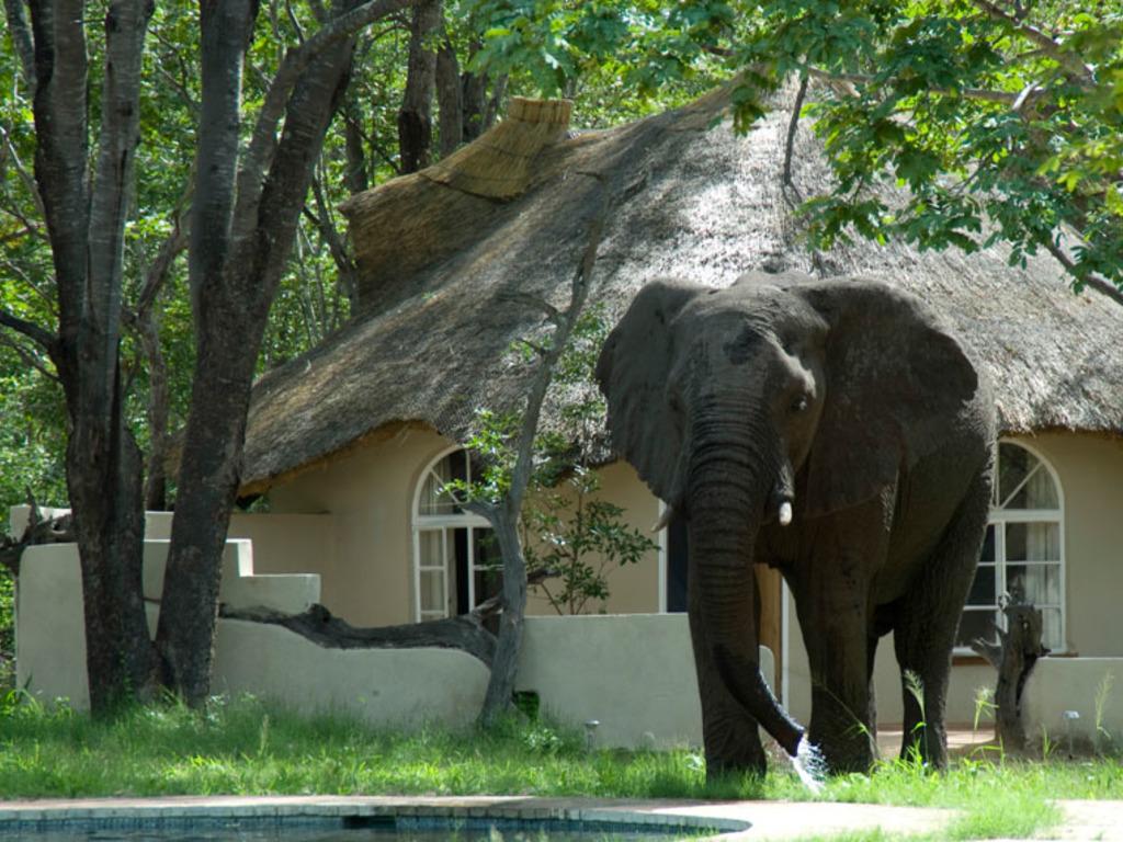 Sable Sands Lodge *** am Hwange-Nationalpark