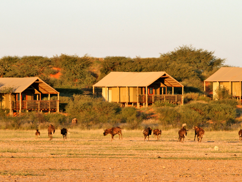 Suricate Tented Kalahari Lodge **** in der Kalahari
