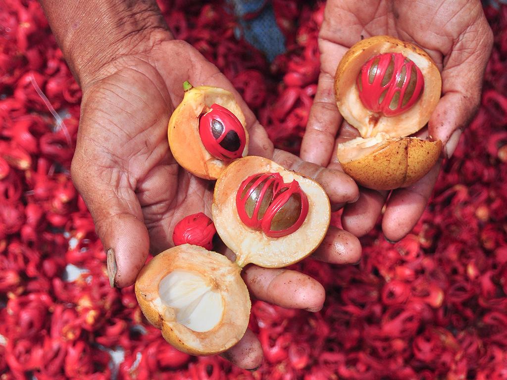 Sanur – Ambon: Flug auf die Molukken