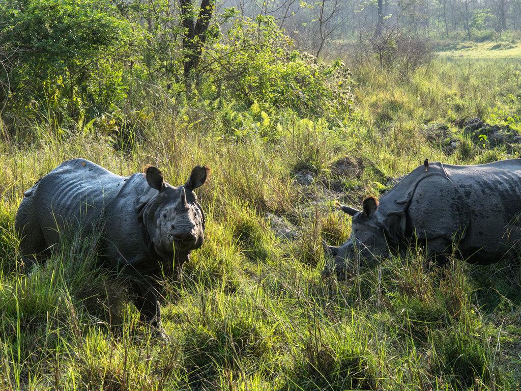 Chitwan-Nationalpark: abwechslungsreiche Aktivitäten im Nationalpark
