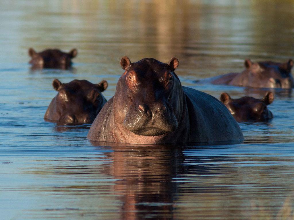 Sambesi Region – Okavango-Delta (West-Delta): Tagesfahrt u.a. durch den Bwabwata N.P., am späten Nachmittag Bootsfahrt mit Sundowner