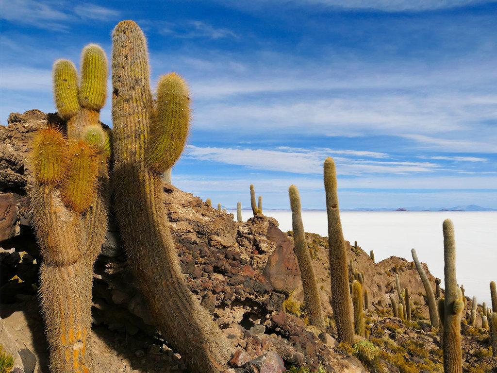 San Juan – Salar de Uyuni – Uyuni – La Paz: Salar de Uyuni, Isla Pia Pia und Incahuasi, Dakar-Denkmal, Nachtbusfahrt nach La Paz