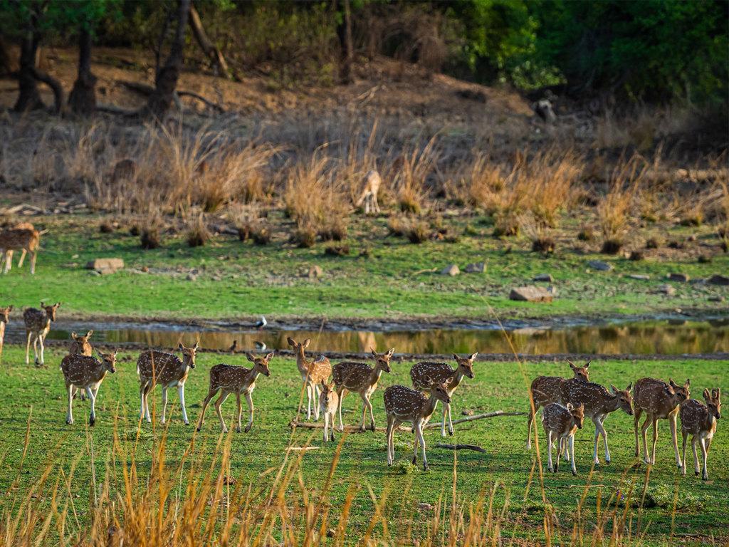 Ranthambore-Nationalpark: Pirschfahrten am Vormittag und Nachmittag