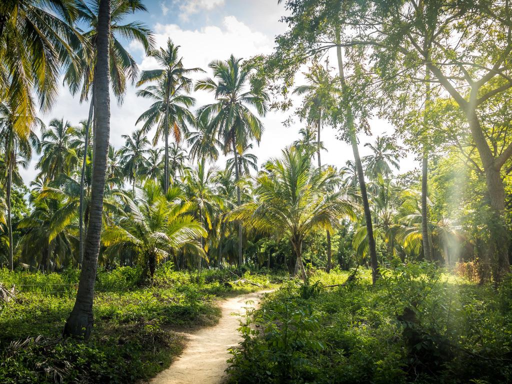 Santa Marta: Freizeit oder optionale Ausflugsmöglichkeiten: z. B. Tayrona-Nationalpark