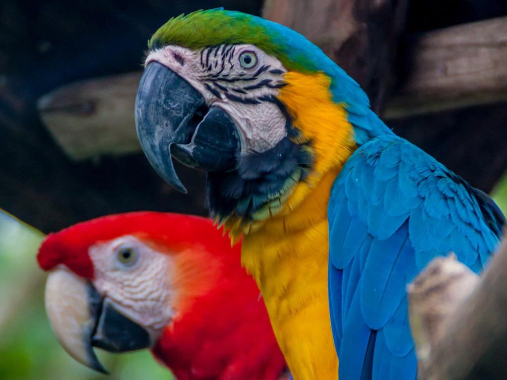 Iquitos: Vogelbeobachtung, Süßwasserdelfine, Wanderung, Riesenbäume und medizinische Pflanzen, Piranha-Fischen