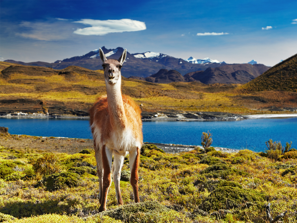 Puerto Varas – Punta Arenas – Puerto Natales: Flug nach Punta Arenas, öffentlicher Bus nach Puerto Natales
