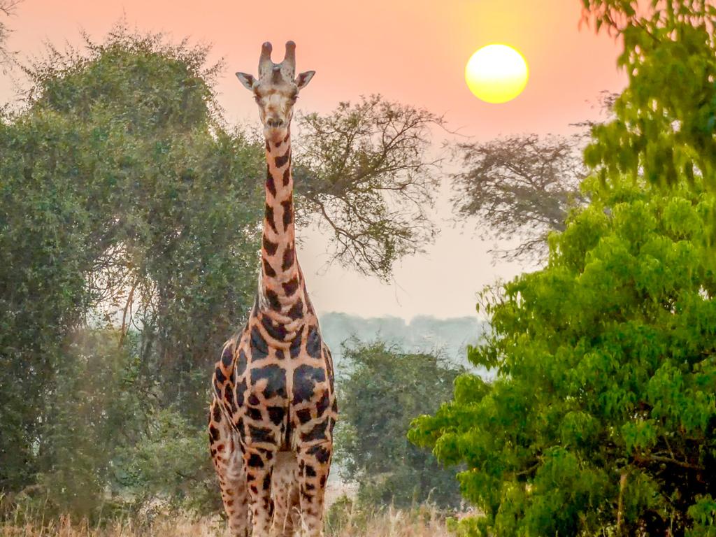 Entebbe – Murchison Falls N.P.  : Nashorn-Tracking im Ziwa Rhino Sanctuary