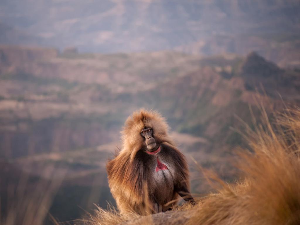 Gondar – Simien-Mountains N.P. – Debark : Besuch Falasha Village; Wanderung im Nationalpark