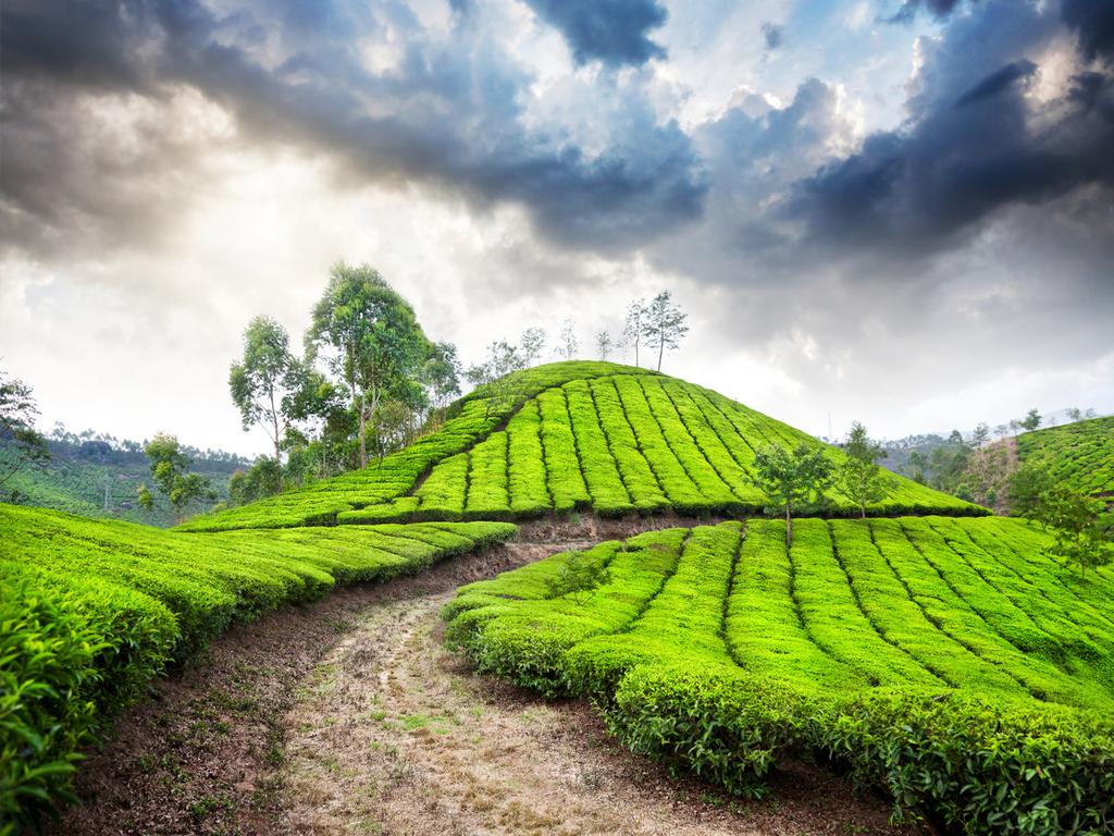 Mysore – Ooty: Devaraja-Markt, Fahrt in die Nilgiri-Berge, Besuch einer Teefabrik, Freizeit