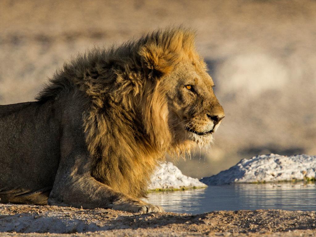 Grootfontein – Etosha N.P.: nachmittags Pirschfahrt