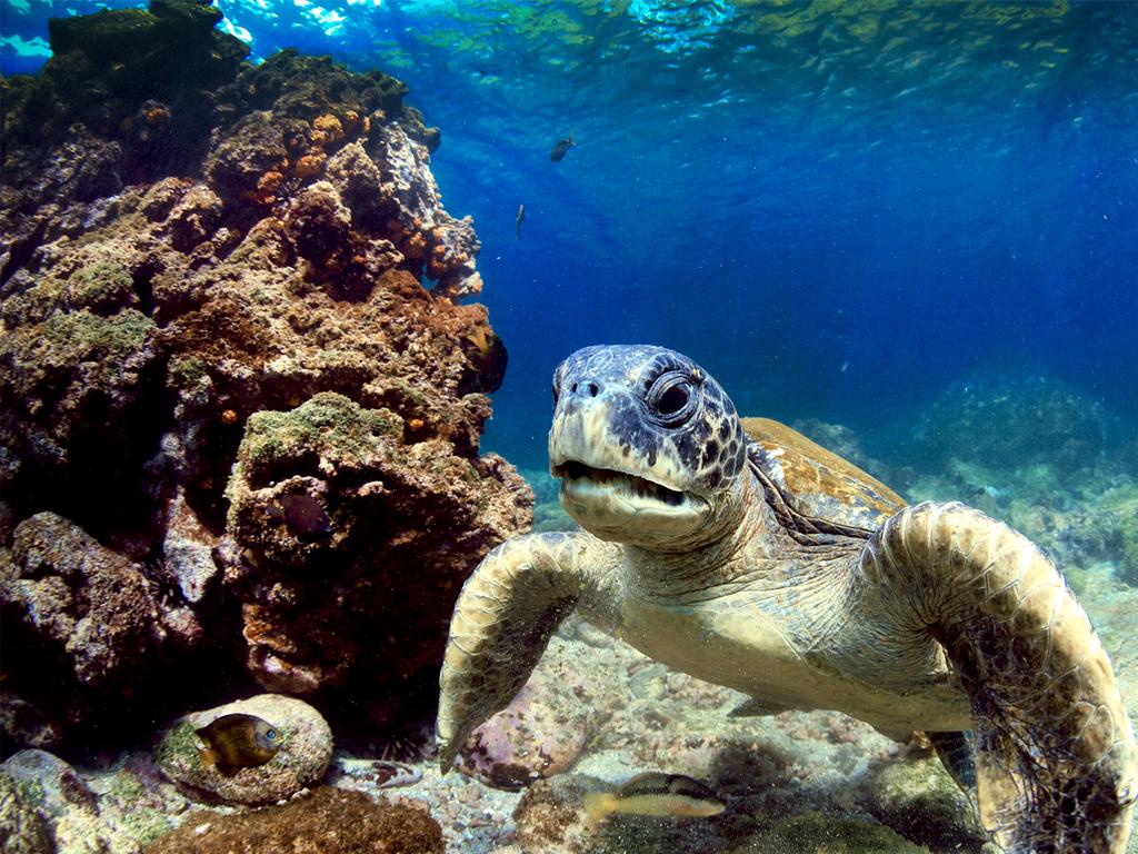 Galápagos Inseln: Tagesausflug nach Nord Seymour, Südplazas, Santa Fe oder Bartolomé mit Tierbeobachtung