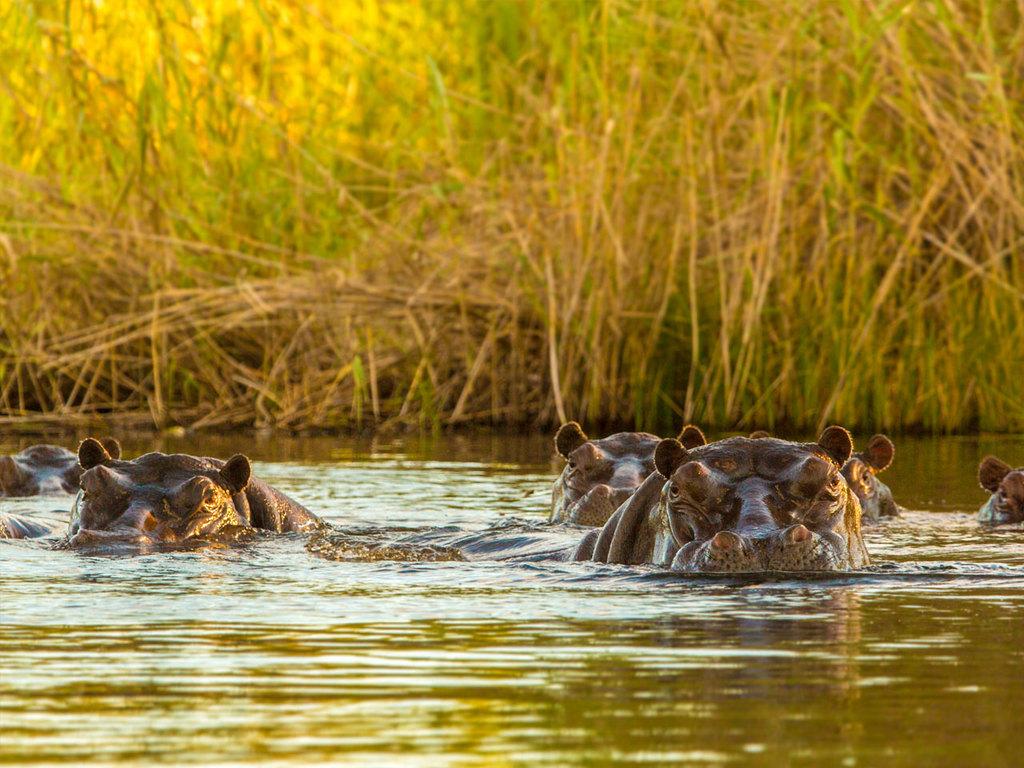 Nata – Kasane - Chobe-N.P.: Fahrt nach Kasane, Bootsfahrt mit Tierbeobachtung auf dem Chobe-Fluss zum Sonnenuntergang