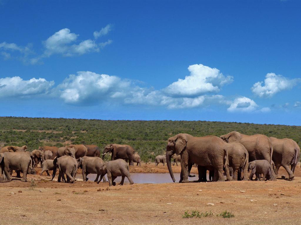Port Elizabeth – Addo Elephant N.P. – Nieu Bethesda: Pirschfahrt im Nationalpark, am Nachmittag Fossilien-Tour
