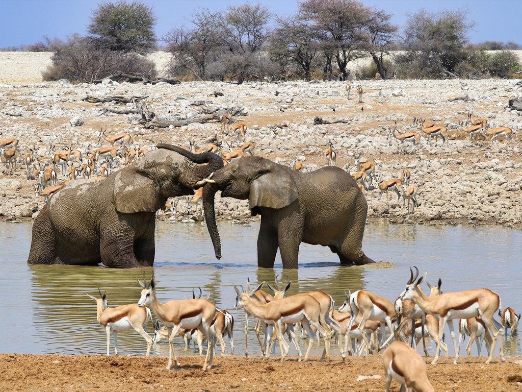 Etosha-Nationalpark – Ondangwa: ganztägige Pirschfahrt im Park, Fahrt durch das Ovamboland