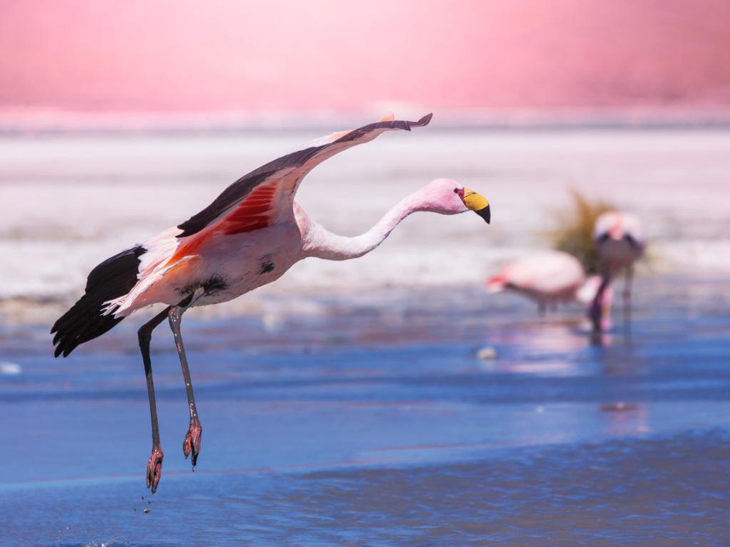 Laguna Colorada – San Juan: Siloli Wüste, Steinbaum, Flamingolagunen Ramaditas, Honda und Hedionda