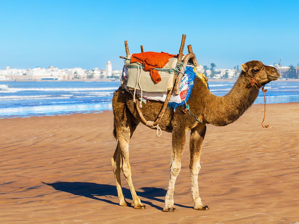 Sidi M'Barek-Strand – Sidi Kaouki – Essaouira: Wanderung vorbei am Fischerort Sidi Kaouki