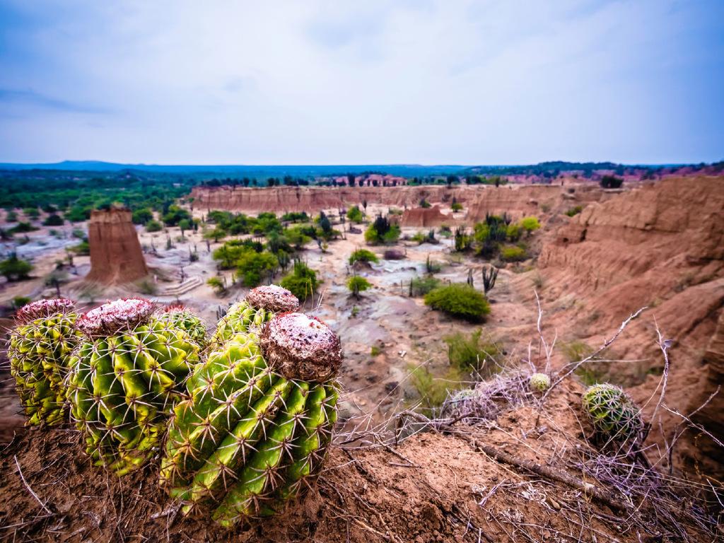 Tatacoa-Wüste – San Agustín : Wanderung in der Wüste, Weiterfahrt nach San Agustín