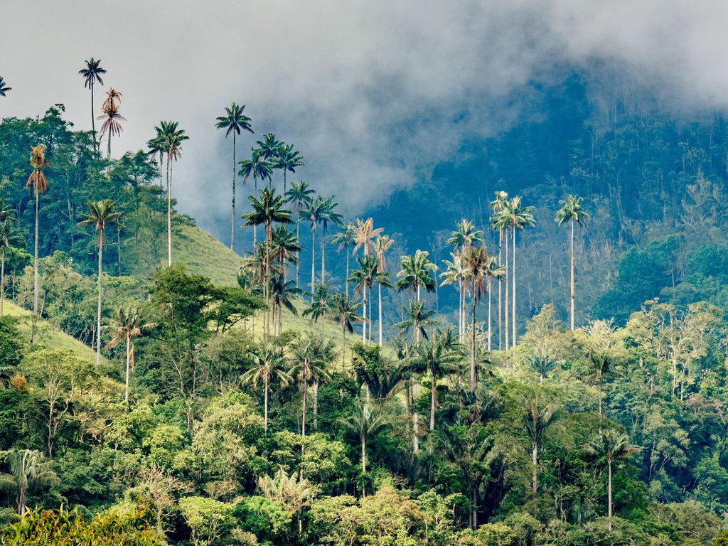 Tagesausflug ins Cocora-Tal: in Jeeps ins Cocora-Tal, Wanderung, Pflanzen einer Wachspalme, Freizeit