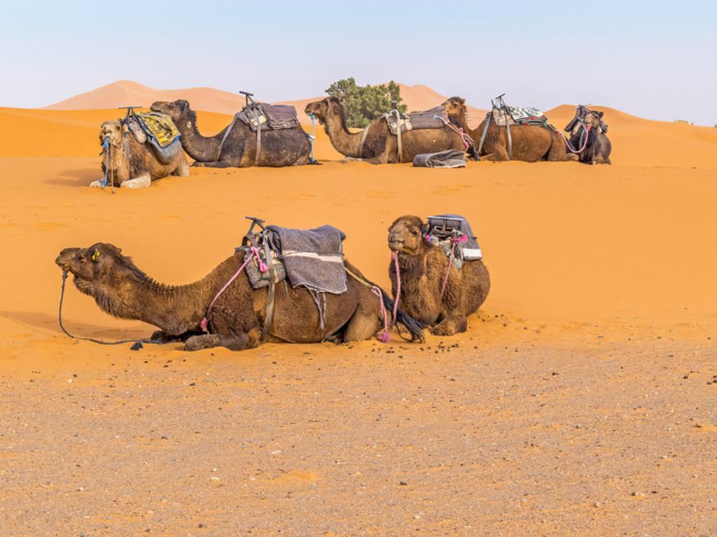 Unser Transportmittel im Erg Chebbi/Marokko.