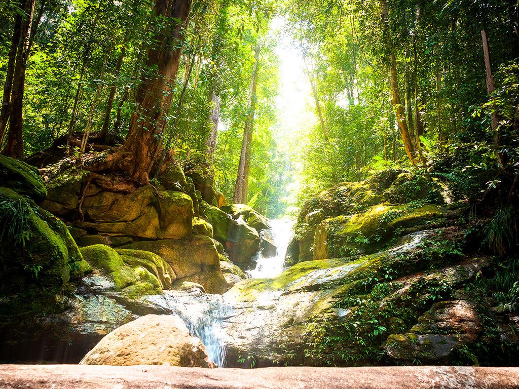 Mulu: Bootsfahrt zum Dorf Penan, Höhle des Windes und Clearwater-Höhle, Nachtwanderung