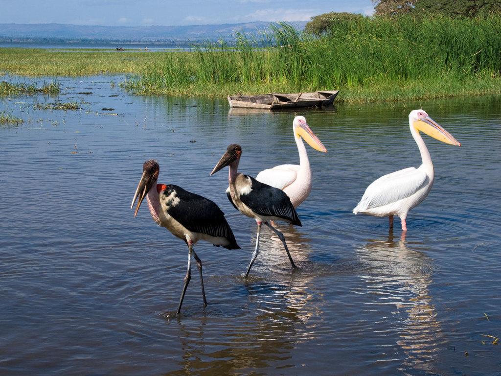 Robe – Hawassa: am Vormittag kurze Wanderung, am Nachmittag Spaziergang am See
