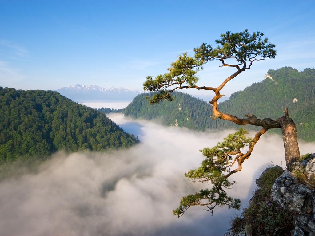 Krakau – Pieninski-Nationalpark – Zakopane: vormittags Rafting-Tour im Pieninski- Nationalpark , nachmittags Wanderung durch den Dunajec-Canyon, weiter nach Zakopane