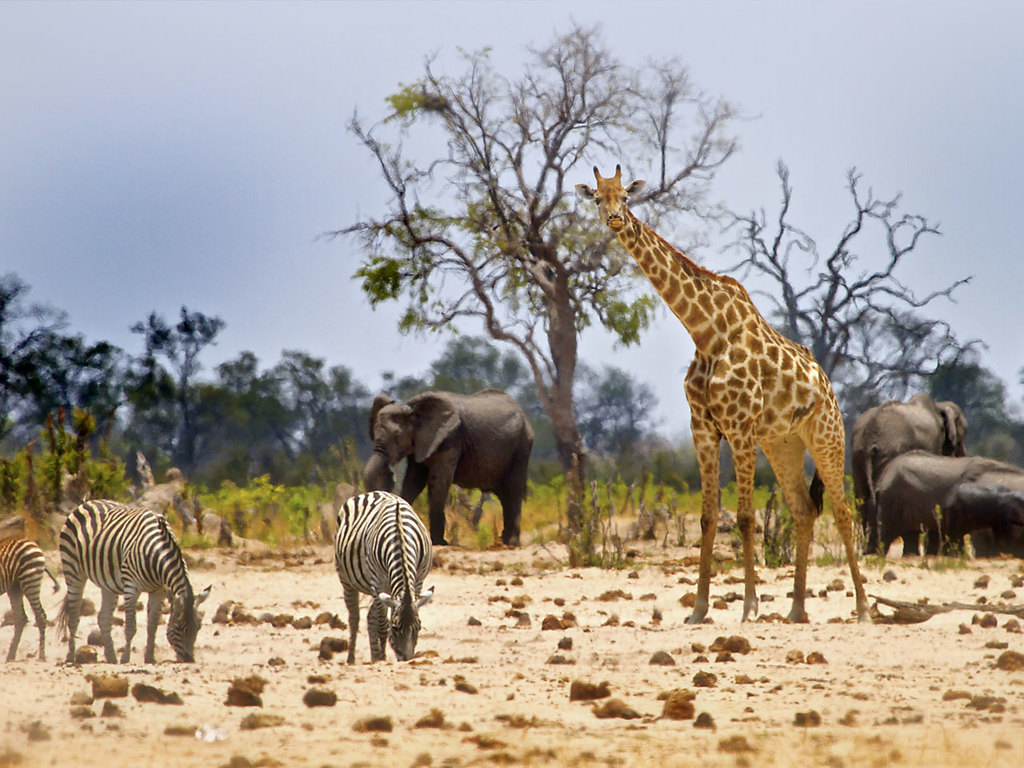 Hwange N.P. : ganztägige Pirschfahrt im offenen Safarifahrzeug