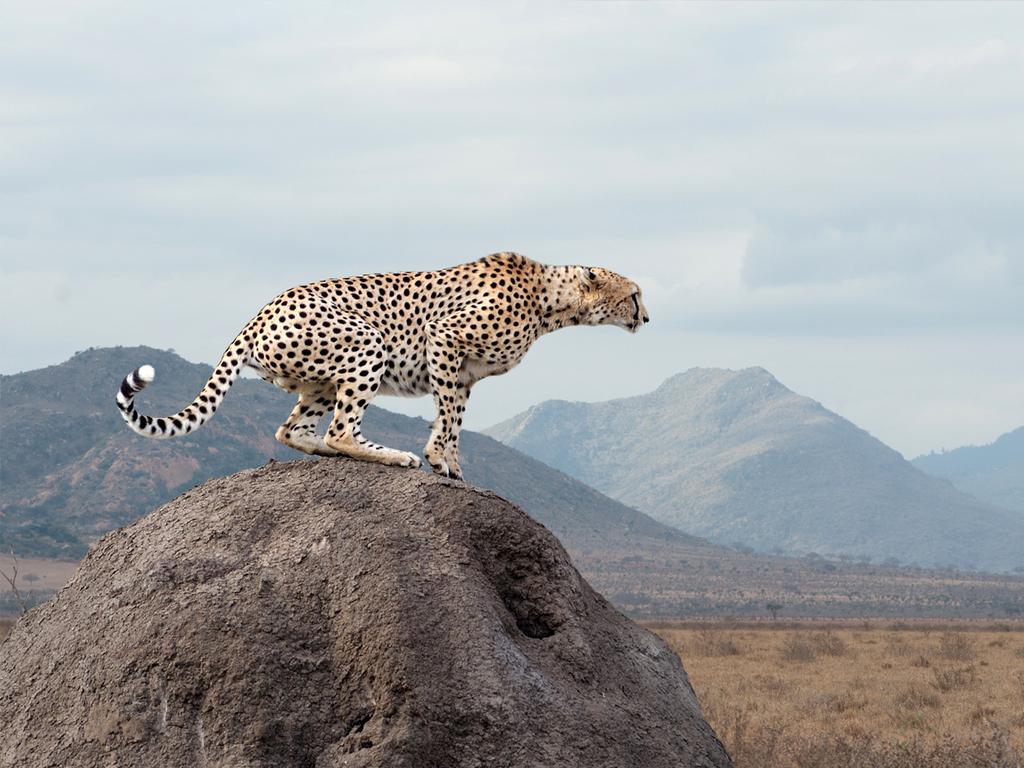 Serengeti N.P.: vormittags und nachmittags Pirschfahrten