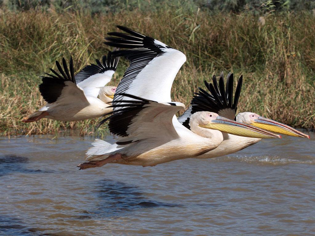 Sine-Saloum-Delta: am Vormittag Freizeit, Erkundung des Deltas mit Pirogen (Muschelinsel und Vogelbeobachtung)