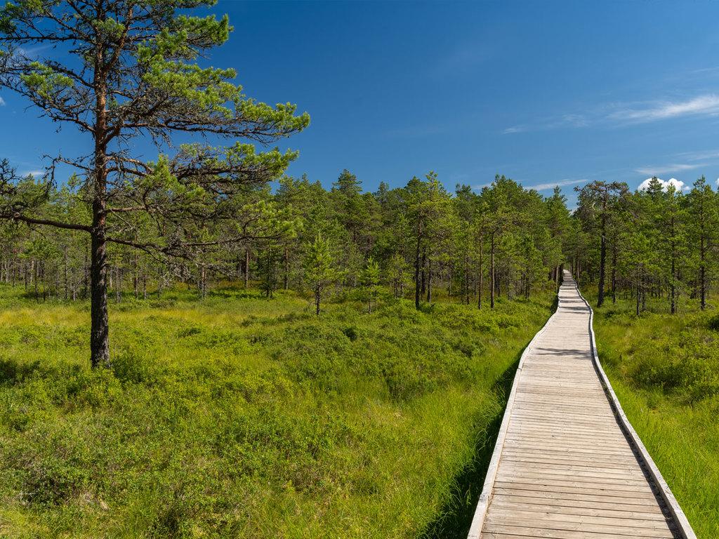 Lahemaa-Nationalpark – Tallinn: Fahrradtour durch den Lahemaa-Nationalpark mit Besichtigung der Gutshäuser Vihula und Palmse, Stopp am Jägala-Wasserfall
