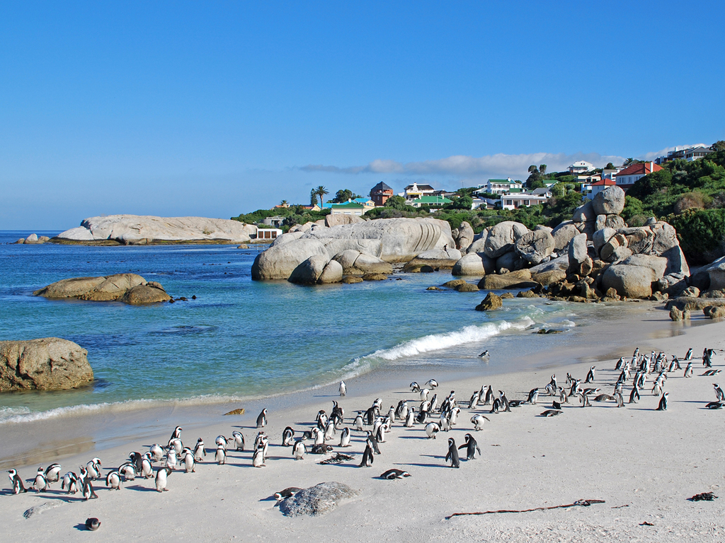 Kapstadt und Kap der Guten Hoffnung : Ausflug zur Kaphalbinsel, Besuch des Townships Masiphumelele, Spaziergang am Cape Point, Stopp bei der Pinguinkolonie am Boulders Beach
