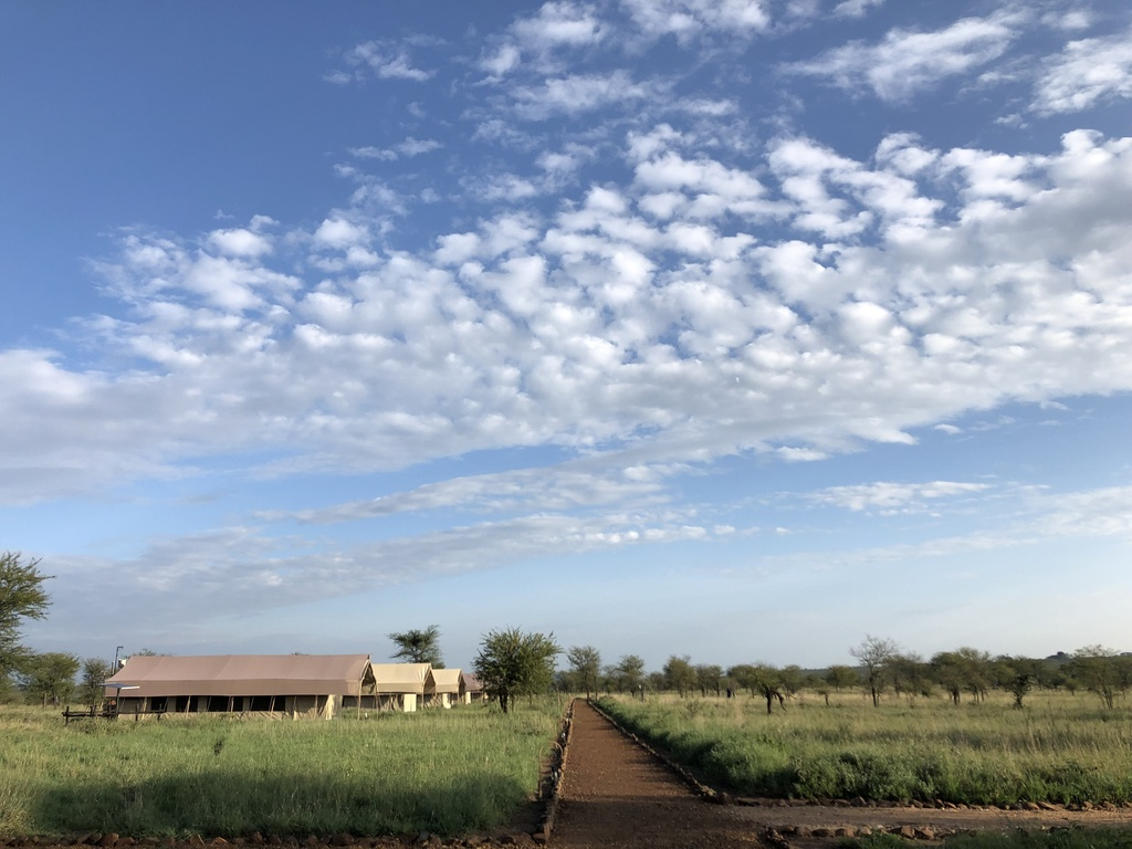 Tortilis Tented Camp **** in Serengeti-Nationalpark