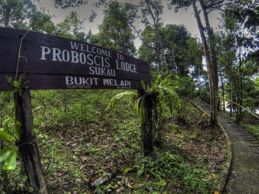Proboscis Bukit Melapi Lodge *** in Kinabatangan