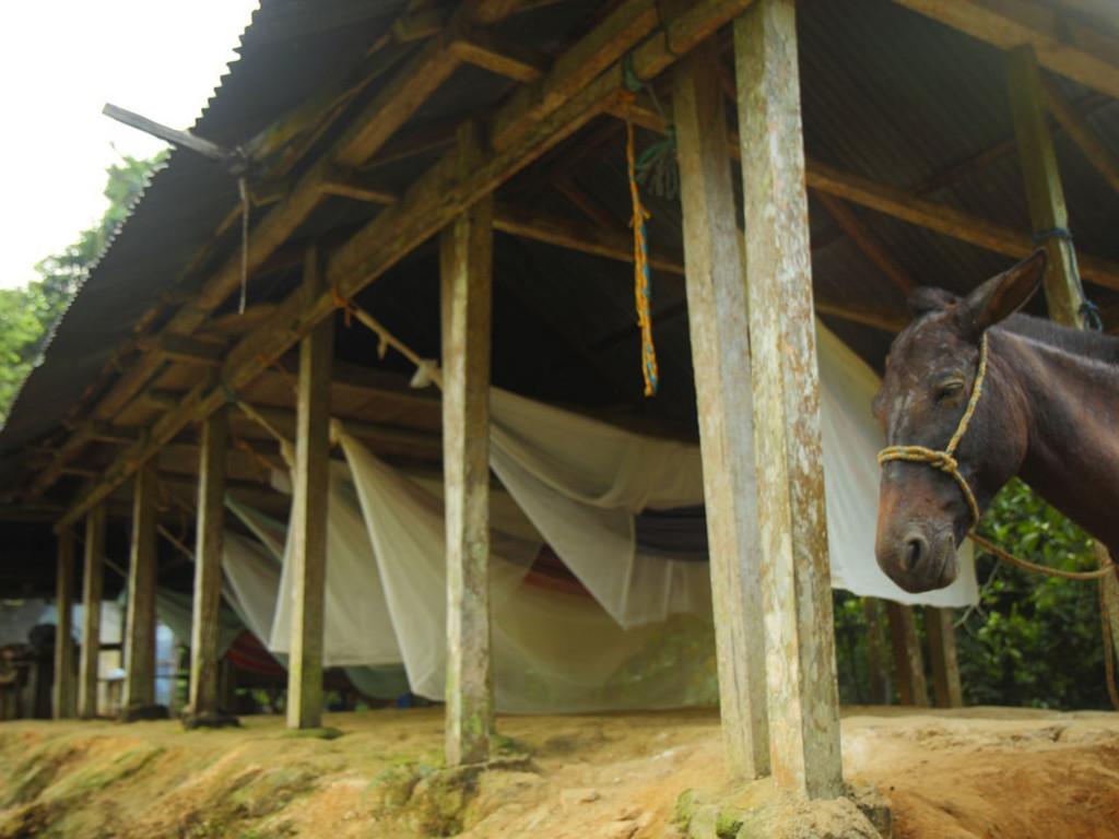 Camps während des Ciudad Perdida Trekkings