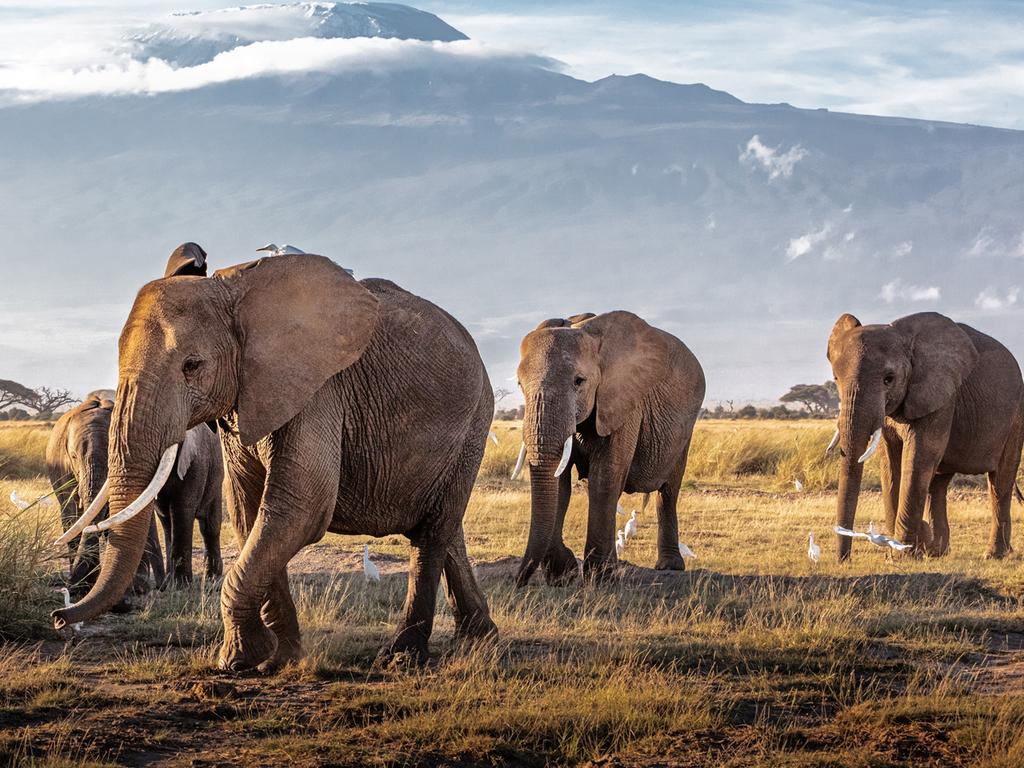 Naivasha – Amboseli N.P. : Pirschfahrt auf dem Weg zur Unterkunft