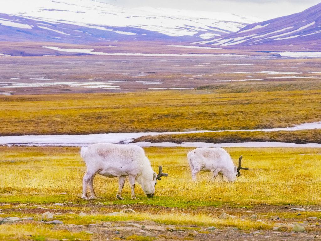 Longyearbyen: Fahrt mit Quad Bikes durch das Advent-Tal, Führung durch die Stollen der Kohlenmine Nr. 3