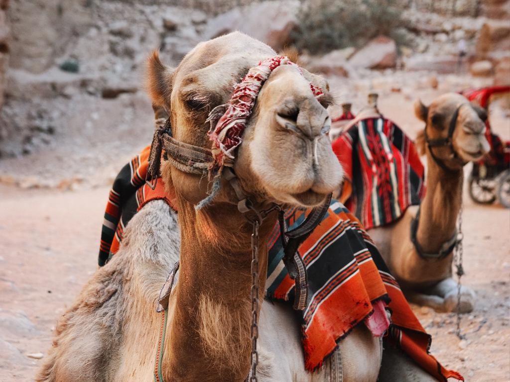 Wadi Musa/ Petra – Wadi Rum-Nationalpark : Jeep-Safari Wadi Rum, Übernachtung im Beduinen-Camp