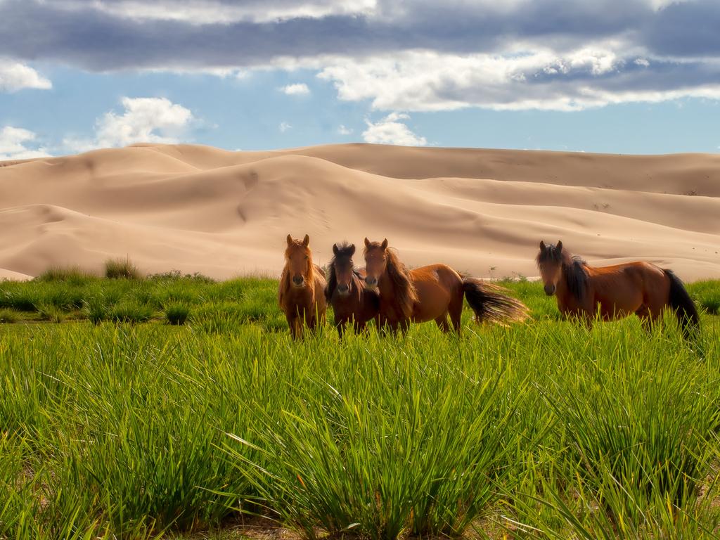 Khongoriin Els – Tsagaan Tolgoi: Fahrt in die Geierschlucht Tsagaan Tolgoi mit Besuch einer Kamelzüchterfamilie, Museumsbesuch und Wanderung