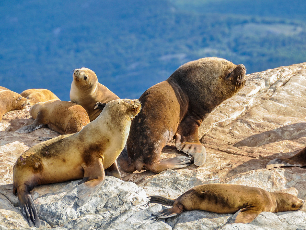 Ushuaia : vormittags Wanderung Laguna Esmeralda, Nachmittag frei