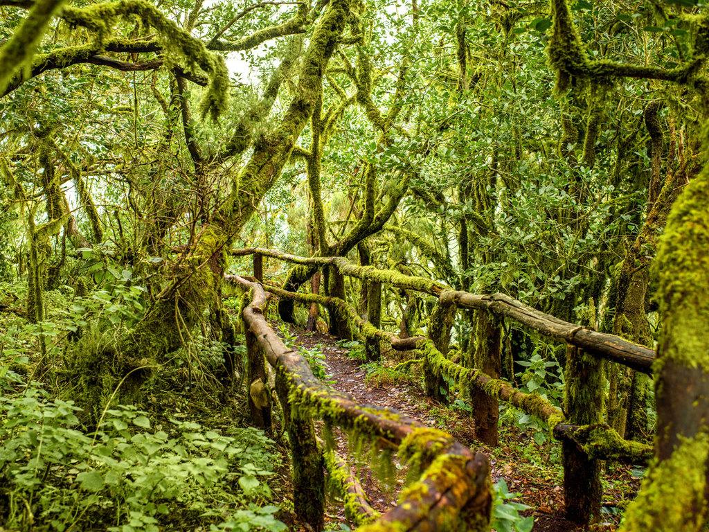 San Sebastian – Garajonay-NP – San Sebastian: Fahrt zum Nationalpark Garajonay, Wanderung durch den Nebelwald, später Nachmittag zur freien Verfügung