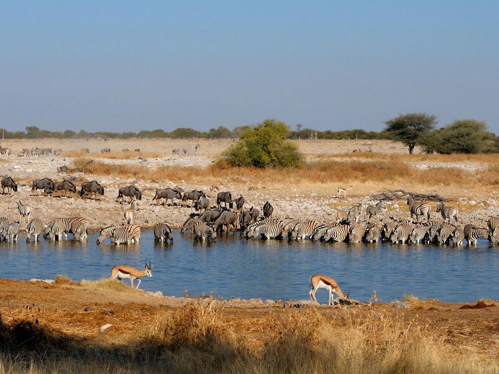 Etosha N.P.: Pirschfahrten im Nationalpark