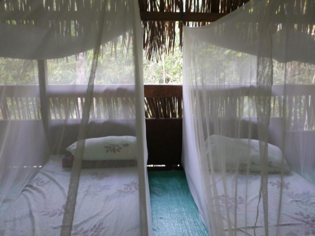 Übernachtung auf Feldbetten auf der Tapir-Plattform mitten   im Dschungel