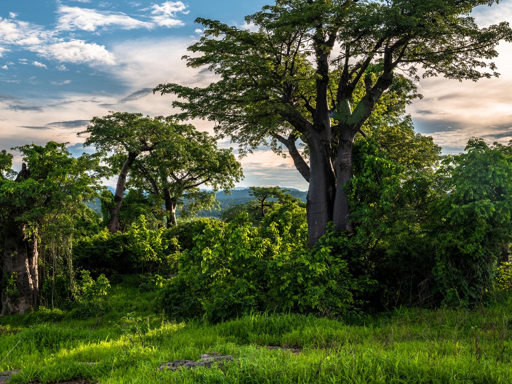 Blantyre: Ausflug zu einer Tee- und Kaffeeplantage, Führung über die Farm mit Verkostung, nachmittags Zeit zur freien Verfügung