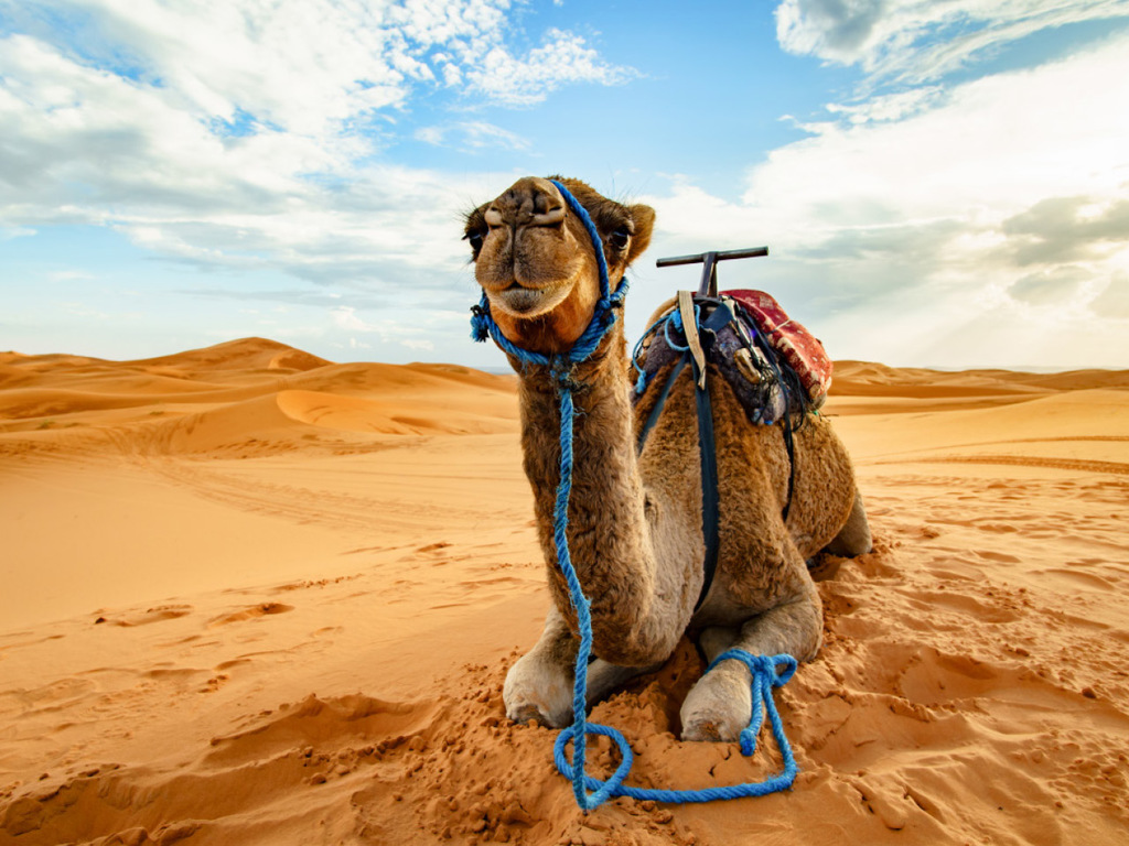 Sahara: Kamelritt in der Wüste, Übernachtung im Beduinen-Camp