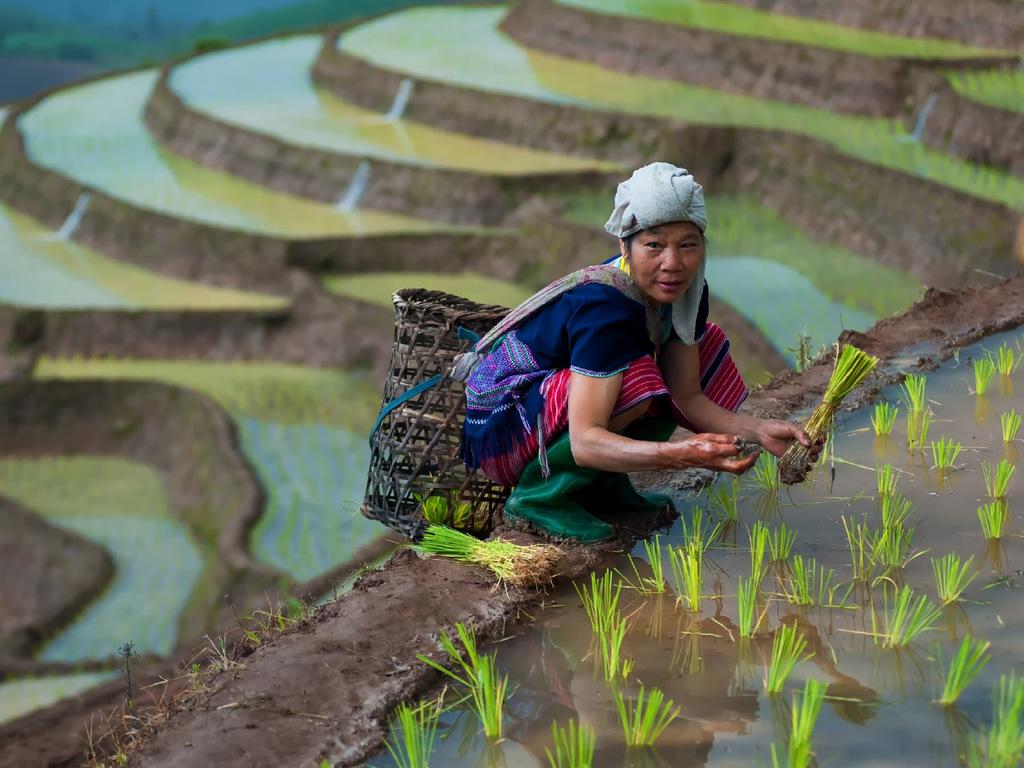 Hanoi – Mai Chau: Mittagessen bei der Gastfamilie, leichte Wanderung mit Besuch von Thai-Dörfern, ab spätem Nachmittag frei, Übernachtung im Homestay