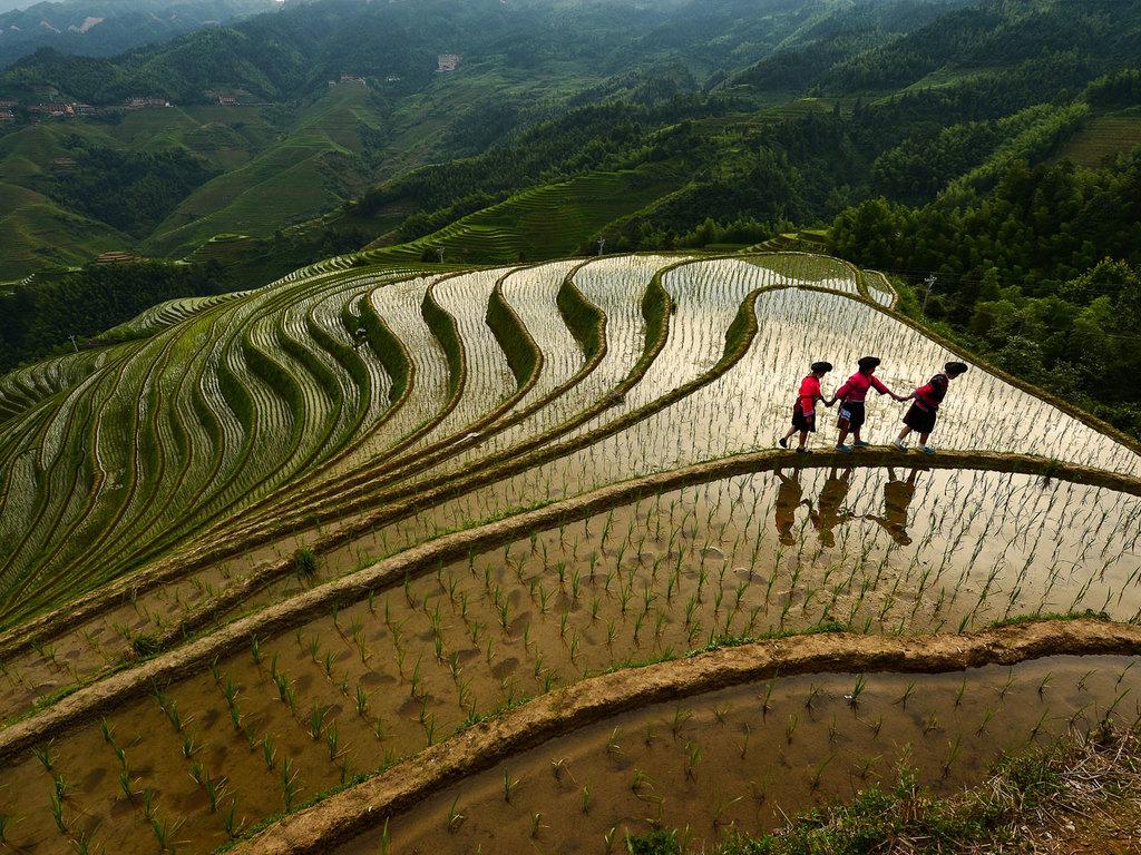 Ping'an – Sanjiang: Wanderung durch die Reisterrasse und Besuch des Zhuang-Dorfes, Sanjiang mit Wind- und Regenbrücke, Trommelturm und Dong-Dorf