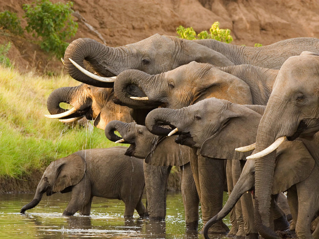 Addo Elephant N.P.: Pirschfahrt, freier Nachmittag