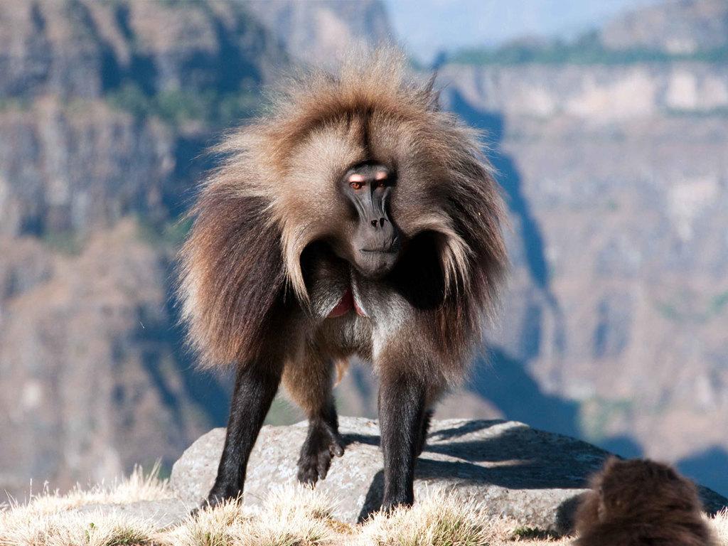 """Gondar – Simien-Mountains N.P. – Debark : Besuch """"Falasha Village"""" und Wanderung im Simien-Mountains N.P."""