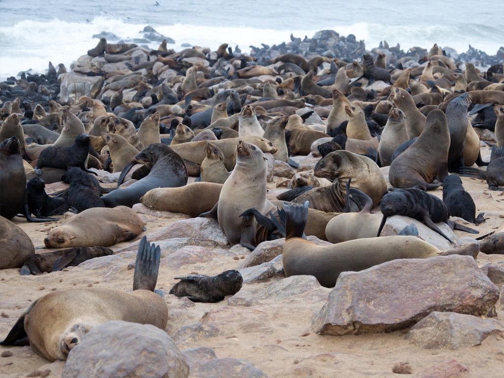 Brandberg – Cape Cross – Swakopmund: Fahrt durch die Namib-Wüste, Stopp bei der Robbenkolonie von Cape Cross, Stadtrundgang in Swakopmund