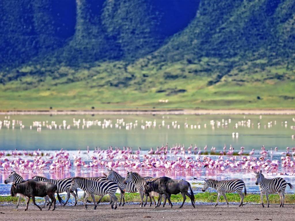 Naivasha – Lake Nakuru N.P. – Naivasha: ganztägige Pirschfahrt mit Tierbeobachtung, mittags Picknick im Park mit Blick auf den See